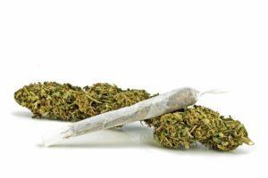 marijuana toxicity
