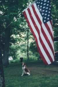 Independence Day and Pet Safety