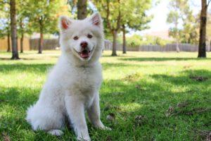 Hyperthermia (Heatstroke) in Dogs Mt. Carmel Animal Hospital