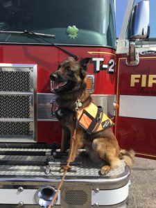 July 15th is Fire Safety Day Mount Carmel Animal Hospital