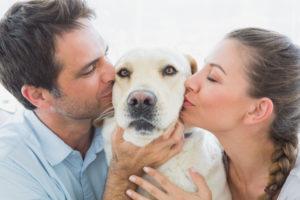 Responsible Dog Ownership Month MCAH