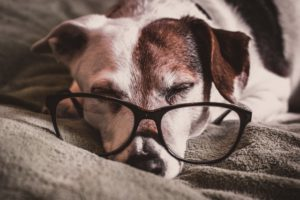 Adopt a Senior Dog Month Mount Carmel Animal Hospital