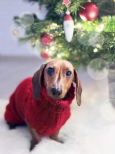 pet safety winter tips