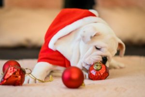 Holiday Pet Safety Tips Mount Carmel Animal Hospital