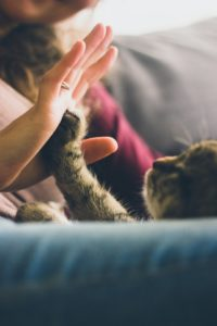 Pet Owners' 2021 New Year's Resolutions MCAH