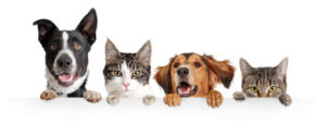 Bringing home a new puppy or kitten tips from MCAH