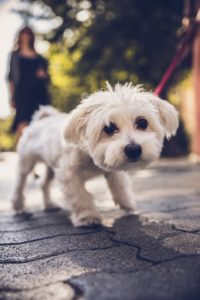 Walk Your Pet Month MCAH