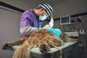 How Anesthesia works at Mount Carmel Animal Hospital