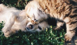 National Adopt A Pet Shelter Day MCAH Online