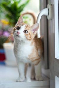 Feline Leukemia Facts MCAH Online
