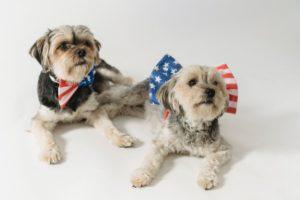 Independence Day Pet Safety Mount Carmel Animal Hospital