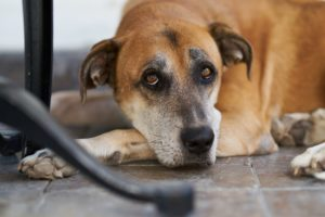 Noise Aversion in Dogs MCAH Online