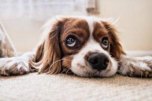 Responsible Dog Ownership Month