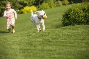 Pet Obesity Awareness Day MCAH
